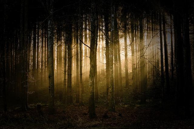 sluneční svit v lese