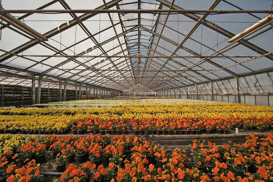 skleník s rostlinami
